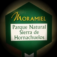 Moramiel Oro • Tapadera • AtracoM Comercio Cashback